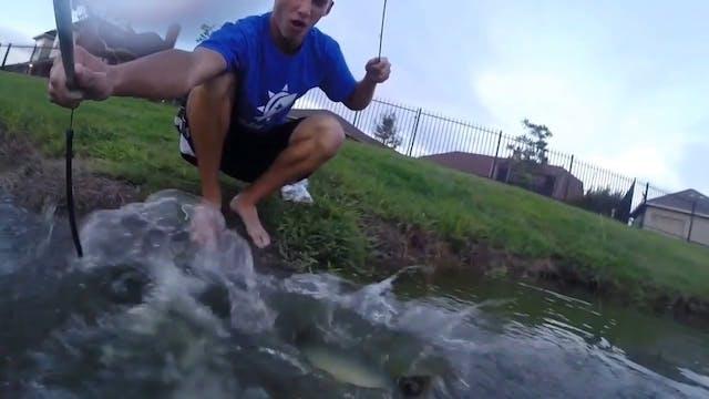 Pet Bass Jumps and Eats Shad