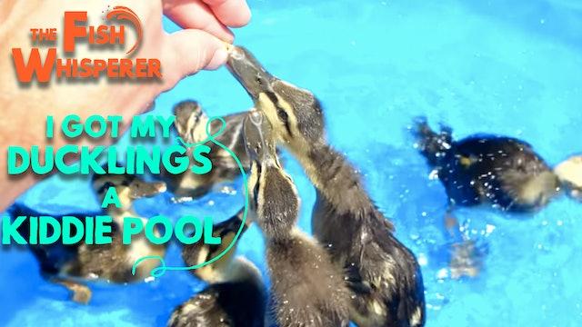 I Got My Ducklings a Kiddie Pool!