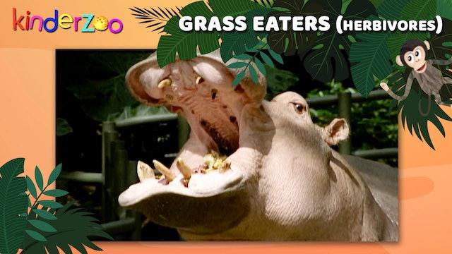 Grass Eaters (Herbivores)