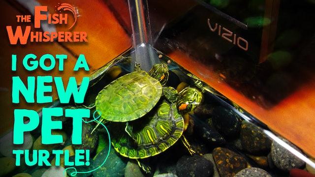 I Got A New Pet Turtle!