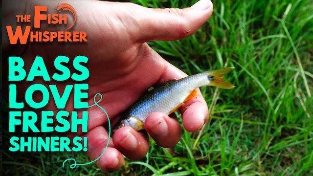 Bass Love Fresh Shiners!