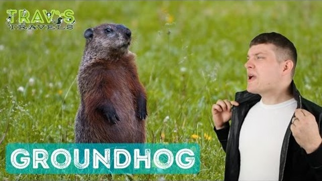 Groundhog - Animal Facts