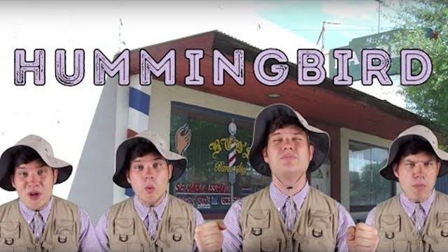 Hummingbird - Animal Facts