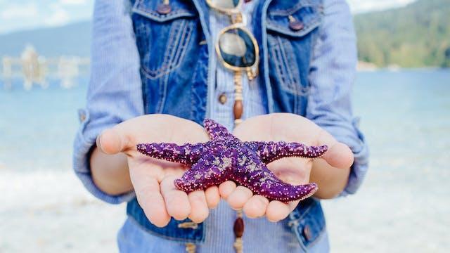 Episode 34 | Starfish