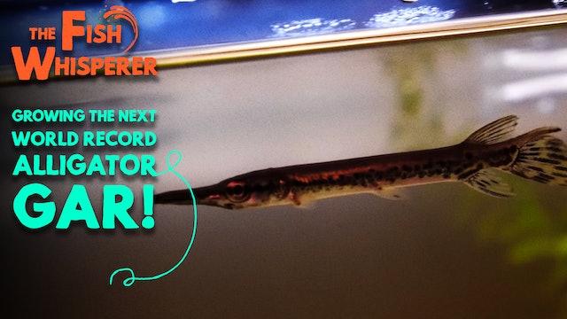 Growing the Next World Record Alligator Gar!