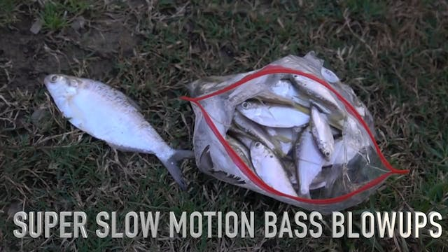 Super SLOW Motion Bass Blowups
