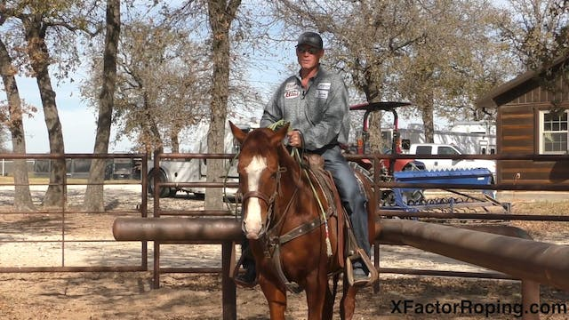 Keeping Your Horse Free in the Box wi...
