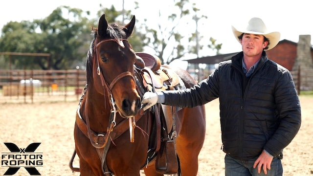 Spending Time with Your Horse with Lane Ivy