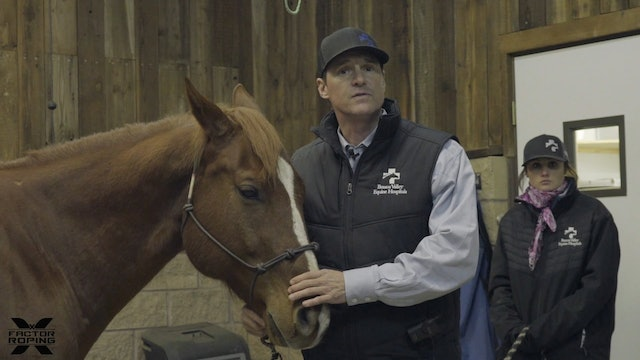 Difference Between Colic and Tying-Up with Dr. Strosnider, DVM