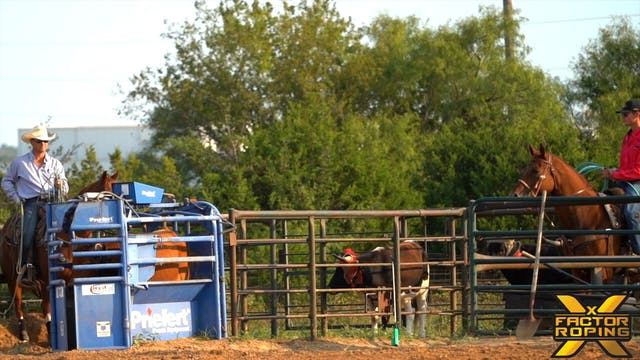 Heeler Positioning Down The Arena wit...