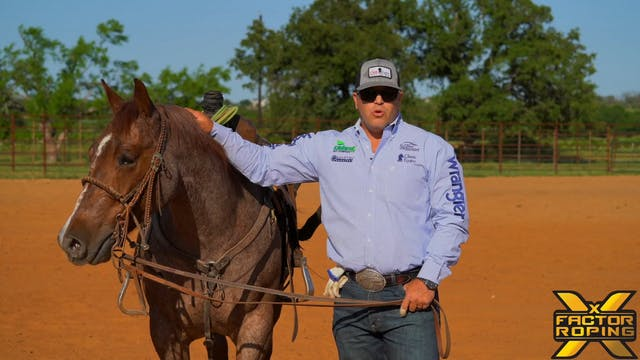 How To Help Your Heel Horse React Whe...