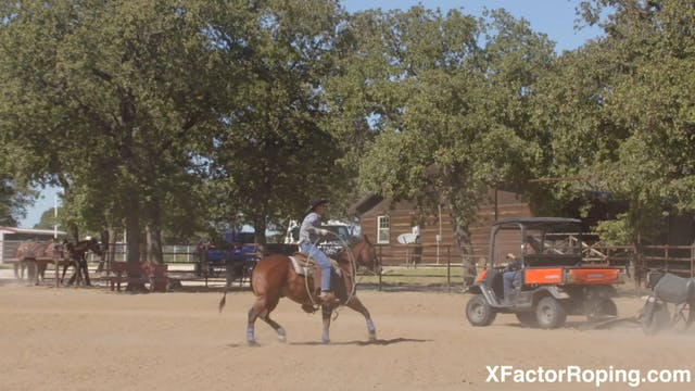 Building Your Horse's Confidence with...