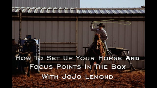 Head Horse Position in the Box with ...