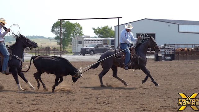 Tricks to Teaching Your Horse to Face...