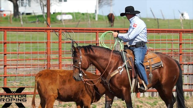 Preparing a Young Horse for Futurity ...