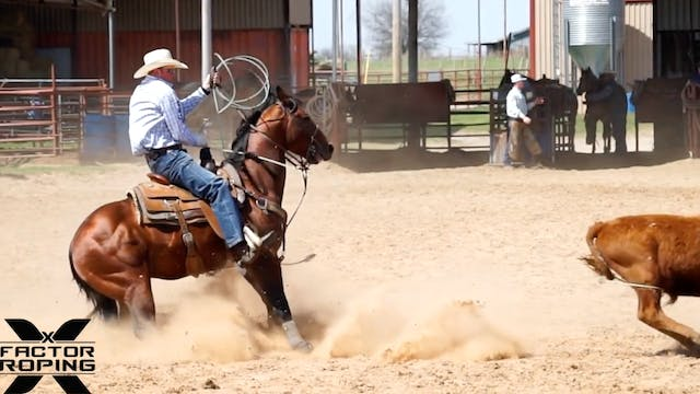 Benefits of a Good Stopping Horse wit...