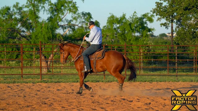 Cues To Give Your Horse While Warming...