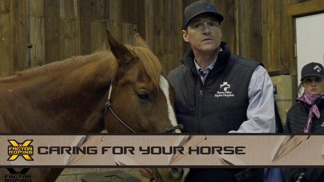 Caring For Your Horse