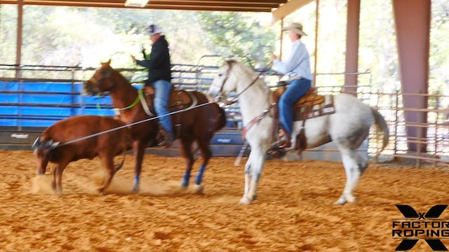 Training a Stronger Head Horse with T...