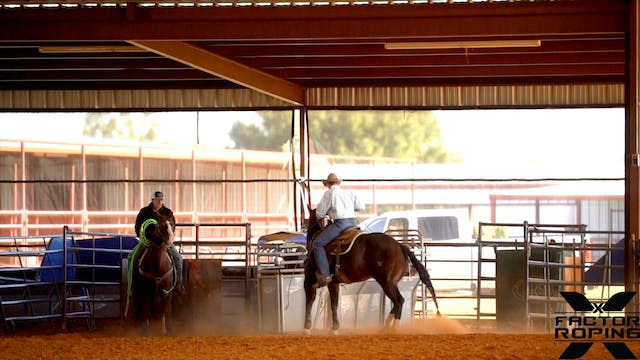 Box Work on a Young Head Horse with T...