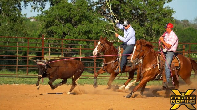 Training A Green Horse On Finding The...
