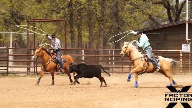 How to Utilize a Trainer Steer with M...