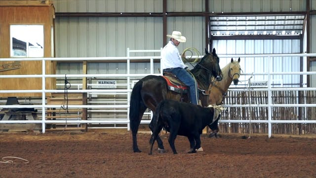 Handling Younger Horses in the Box wi...