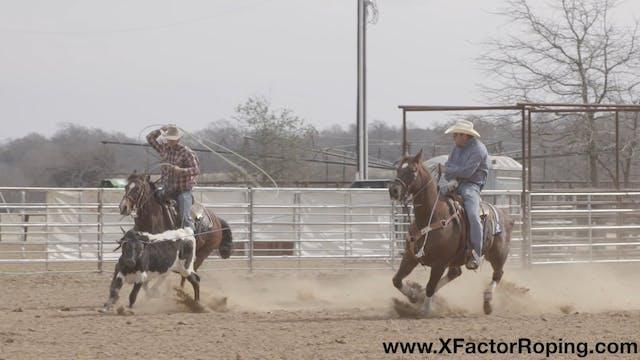 Handling Cattle and Breaking Steers D...