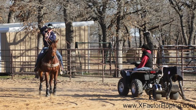 Dummy Drills on Handling Cattle with ...