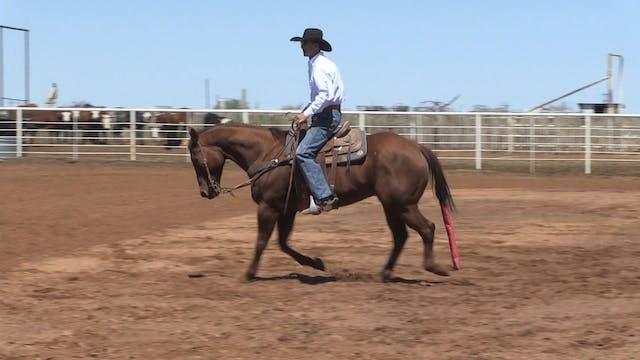 Training Your Horse to Follow Your Ha...
