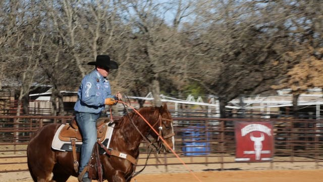 Reasons Heel Horses Drop Their Should...