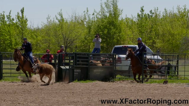 Step By Step on Handling Cattle with ...