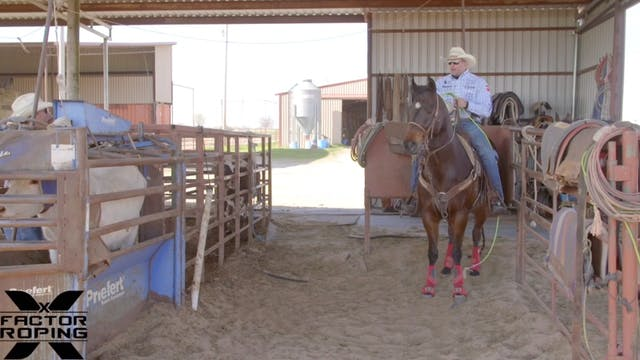 Squaring Your Horse Up in the Box wit...