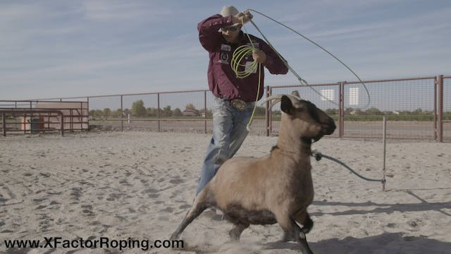 Timing Roping The Goat and Cattle wit...