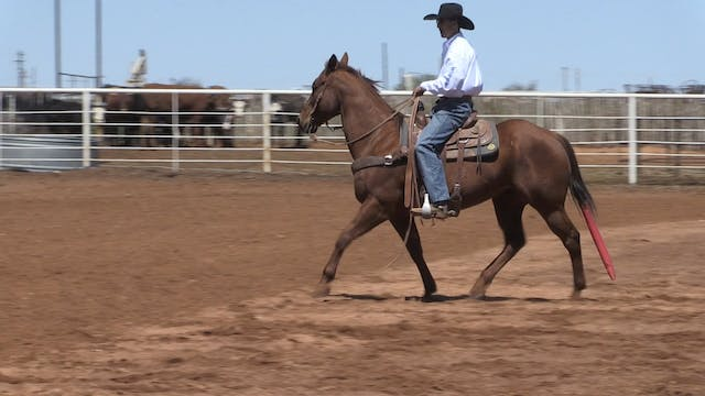 Counter Arching Your Horse with JoJo ...