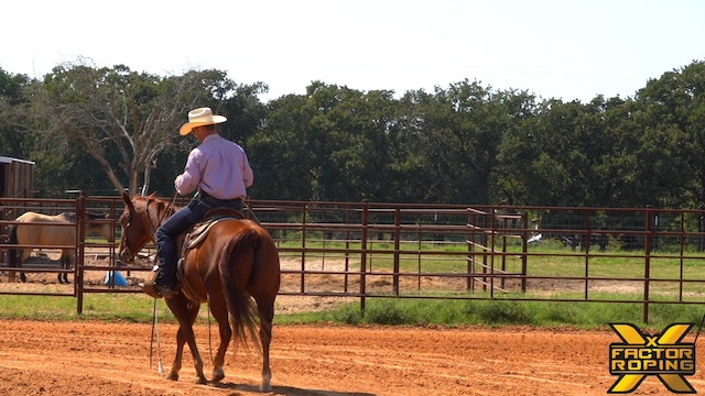 Buddy Hawkins' Drills On Young Horses When Roping the Dummy