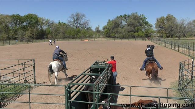 Heading Position and Keeping Horses F...