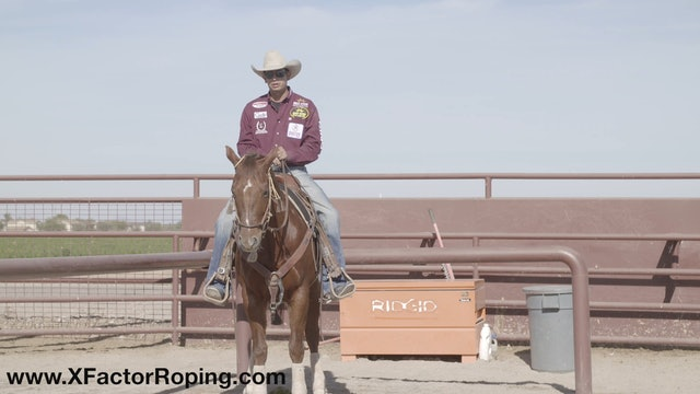 Working with Horses That are Tight In The Box with Cesar De La Cruz