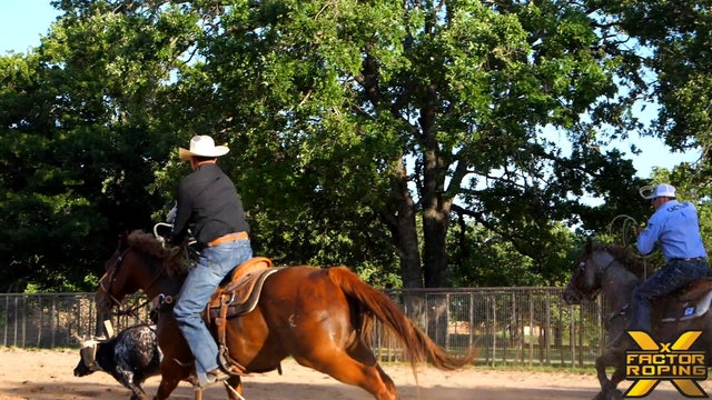 Handling and Reading Fresh Cattle with Clay Tryan