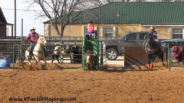 Helping Your Horses Face with JoJo Lemond