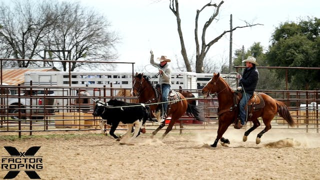 Practice Pen on a Young Head Horse wi...