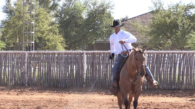 Correcting Your Horses Stop During Th...