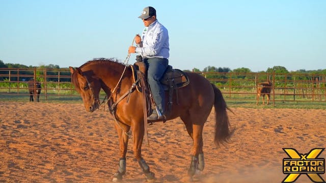 Riding Cues To Control Your Horse's H...