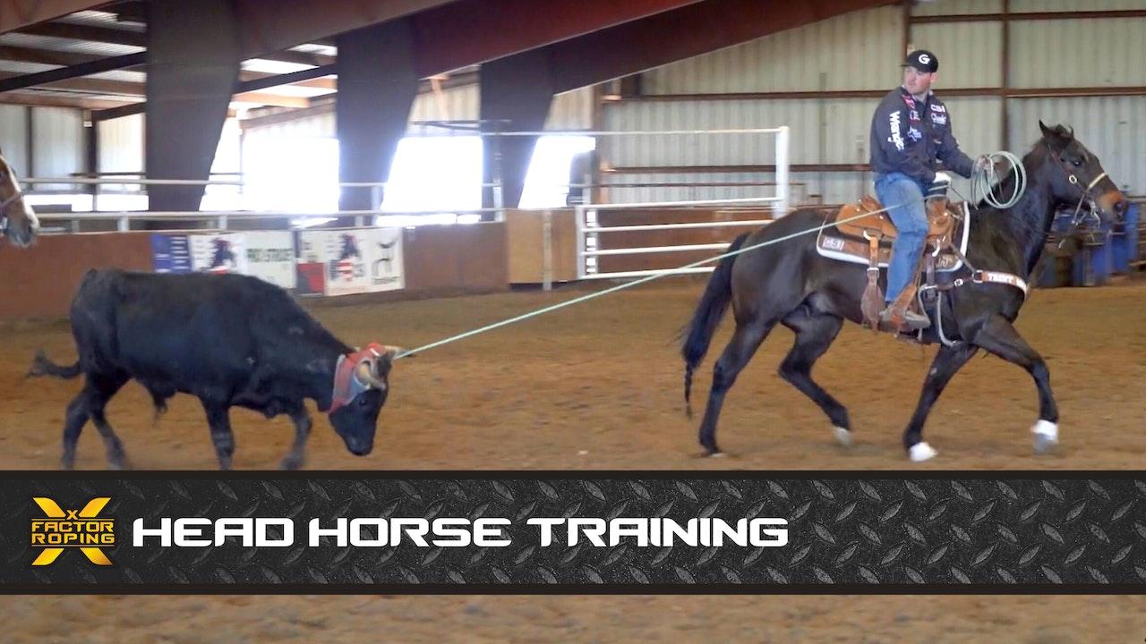 Head Horse Training