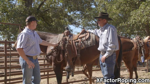 Training Horses and Building A Founda...