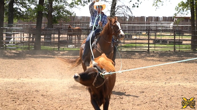 First Run in the Practice Pen on a Cow Bred Horse with Paden Bray