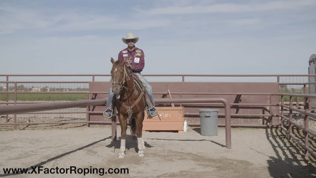 Horsemanship In The Box with Cesar De...