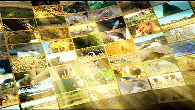 S1 Ep 6 - Wild About Animals