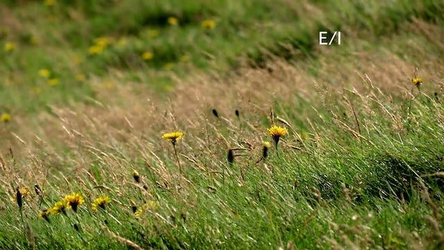 S1 Ep 5 - Wild About Animals