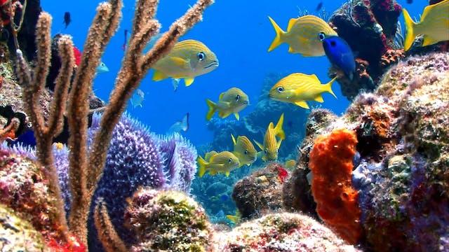 S1 Ep 4 - Under Sea Inspiration